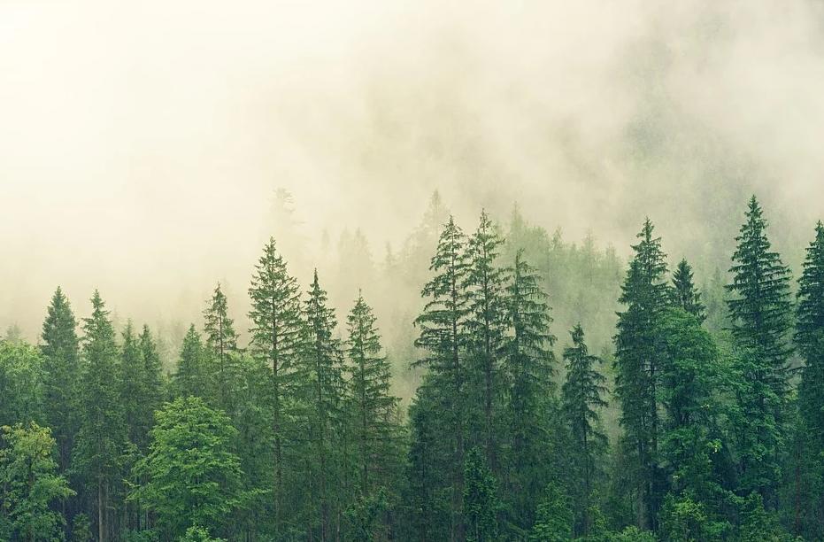 Crean un explorador forestal para hacer seguimiento de incendios y plagas